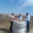 Bitlis'te sertifikalı patates tohumu üretimi