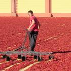 """Mevsimlik işçiler """"kırmızı altın""""la geçiniyor"""