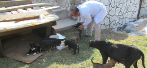 Yavru köpekleri sahiplenecek biri aranıyor