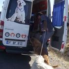 Ölüme terk edilen köpeklere Büyükşehir Belediyesi sahip çıktı