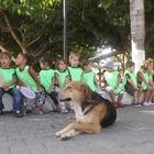 Kaş'ta sokak hayvanları yararına kermes düzenlendi