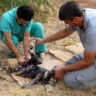 Muğla'da zifte saplanan köpek yavrusu kurtarıldı