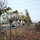 """Aksaray'da """"Yeniden Yeşil Aksaray"""" projesi"""