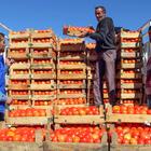 """""""Doğu'nun Çukurovası""""nın meyve ve sebzeleri yurt dışı pazarında"""