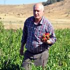 Muş'ta sonbaharda da çilek üretiliyor