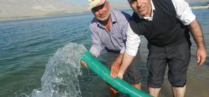Karakaya Baraj Gölü'ne 650 bin yavru balık bırakıldı