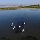İzmit Körfezi 150 kuş türüne ev sahipliği yapıyor