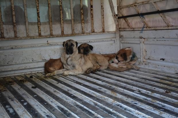 Yaralı hayvanlar Tatvan'da tedavi ediliyor
