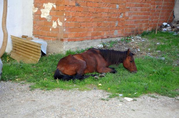 Yaşlı ve hasta at tedavi edildi