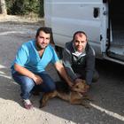 Dağdaki başıboş köpekler barınağa yerleştirildi