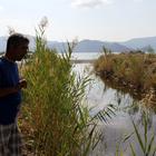 Fethiye'de toplu balık ölümü