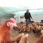 Devlet desteğiyle hayalindeki çiftliğe kavuştu