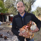 Hobi amaçlı başladı, tavuk çiftliği kurdu