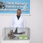 Yaralı baykuş tedavi edildi