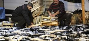 Karadeniz'de palamut bereketi devam ediyor