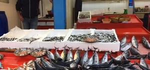 Giresunlu balıkçılar hamsiden umutsuz