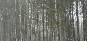 Kocaeli ve Sakarya ormanlarında bakım çalışması
