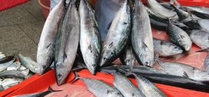 Palamut avının yıl sonuna kadar sürmesi bekleniyor