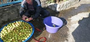Doğankent'te elma pekmezi yapımı etkinliği