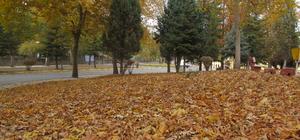 Turhal'da dökülen sonbahar yaprakları