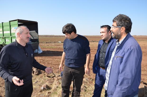 Siverek'te sertifikalı tohum kullanımını yaygınlaştırma çalışmaları