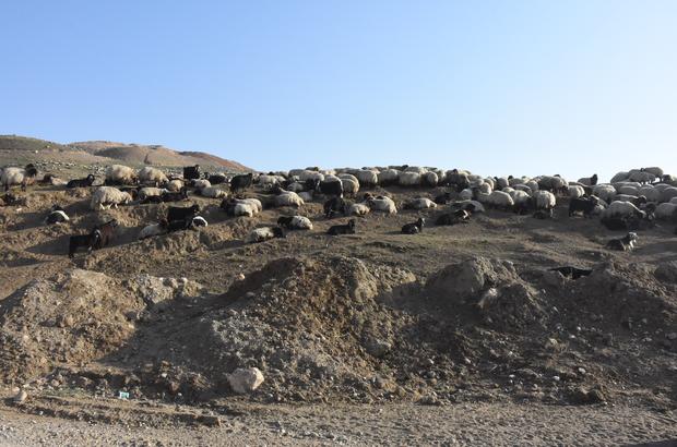Nehre düşen koyununu kurtaran çoban boğuldu