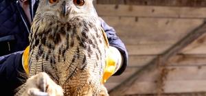 Bayburt'ta yaralı bulunan puhu kuşu tedavi edilecek