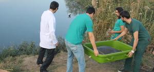 Tedavi edilen Nil kaplumbağası suya bırakıldı