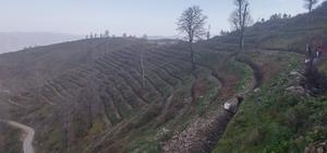 Erbaa'da ağaçlandırma çalışması