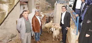 Hisarcık ta Ramlıç Koyunu Yetiştiriciliği Projesi