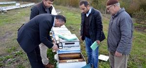 Sakarya'da 60 bin arının zehirlendiği iddiası
