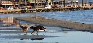 Akyaka Sahili'nde deniz suyu 25 metre çekildi