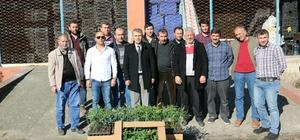 Çarşamba'da şeftali üreticilerine fide desteği