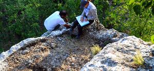 Ermenek'te antik dönemdeki tarımsal üretim araştırıldı