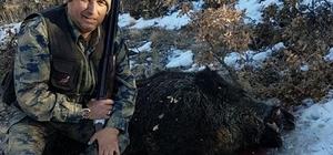 Yaban domuzları ava saldırdı