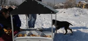 Doğa Dostu Belediye'den Hayvanlara Gıda Desteği