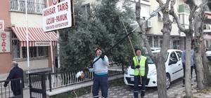 Akhisar'da ağaçlara kış bakımı