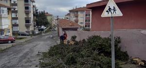Zonguldak'ta lodos ve fırtına