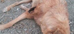 Sokak köpeklerinin öldürülmesine tepki