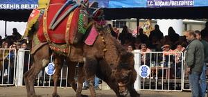 Aydın'da deve güreşi