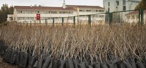 Büyükşehir Belediyesinden çiftçilere 650 bin ücretsiz fidan