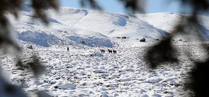 Karaman'daki yılkı atları