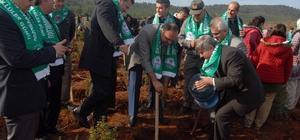Şehit Ömer Halisdemir Hatıra Ormanına sığla ve çam fidanı dikildi