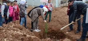Genç gönüllüler okul bahçesine ağaç dikti