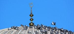 Bingöl'de güvercinler cami kubbesinde güneşlendi