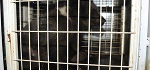 Bursa'da yavru ayılara tır çarptı