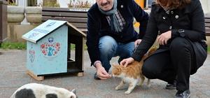 Mudanya'da sokak kedileri için ev yaptırıldı