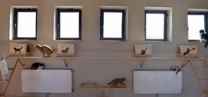 Karlar şehrinde sokak hayvanlarına konforlu bakım evi