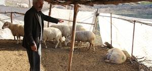 Hayvanları telef olan çiftçiden yanlış tedavi iddiası