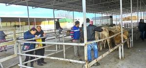 Genç çiftçiler işletmelerine kavuştular